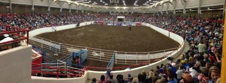 rodeo2013
