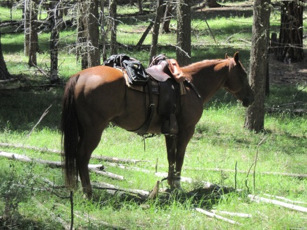 Vacation 2011- Pecos 027